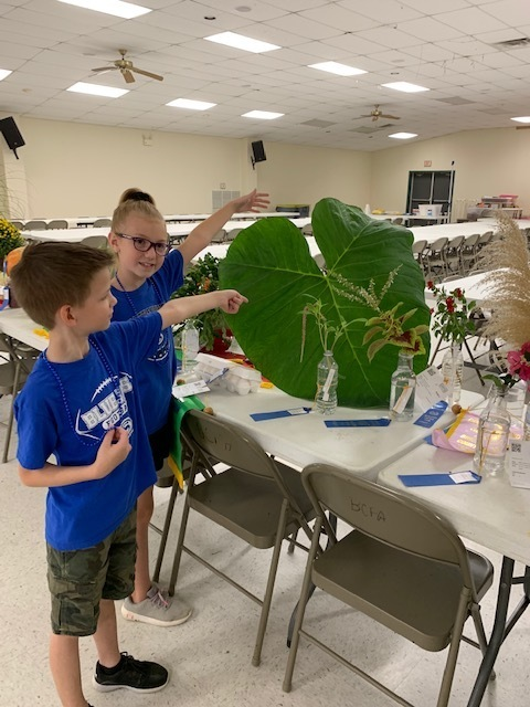 Kids looking a giant leaf