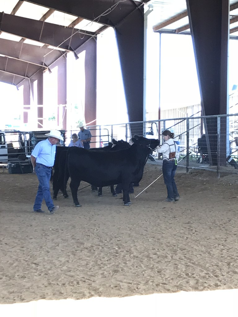 Snook girl walking her cow at the live stock show