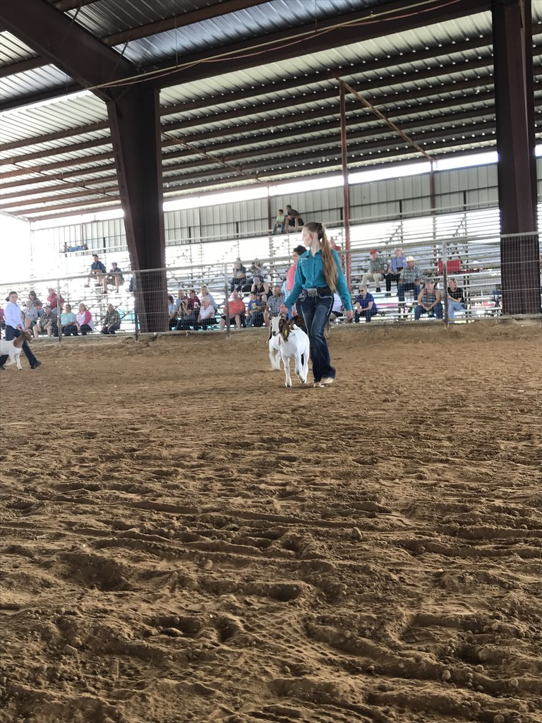 Snook girl walking her goat at the show